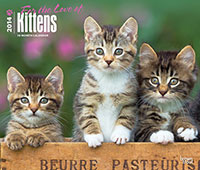 For the love of kittens 2014