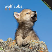 Wolf cubs 2013